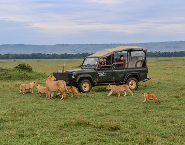 Lion Family Greets Visitors