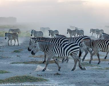 Zebras at Dusk