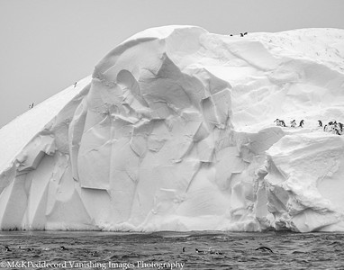 Iceberg  with Penguins