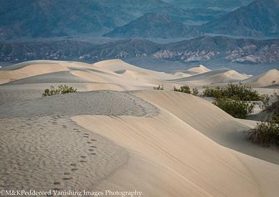 Tracks on Mesquite Dunes