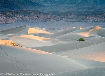 dunes Image # 18