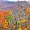 treeless fall