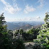 frosty @ mt. mitchell...  #mountmitchell #nc