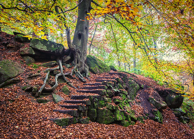 Autumn steps Padley gorge