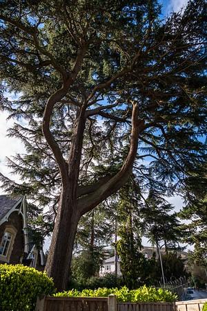 Malvern Trees Guide