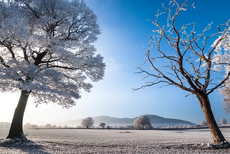 Winter Hoarfrost, Malvern Hills