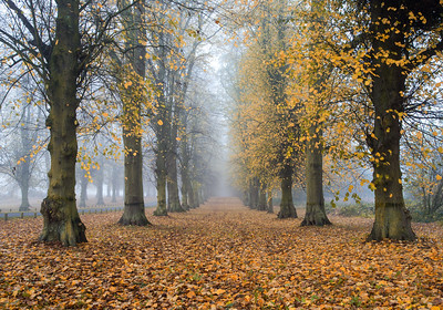 Misty trees Clumber park