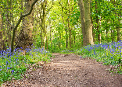 Blue bell path