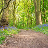 Blue bell path Everton