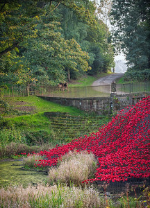 Blood swept land and sea of red poppies