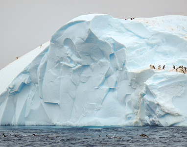 Iceberg  with Penguins Brown Bluff  Antarctic Sound