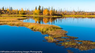 Fall Colors along Dalton Highway
