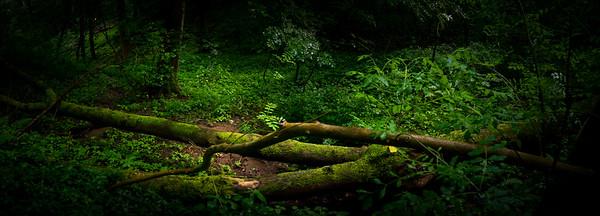 Malvern's Own Rainforest