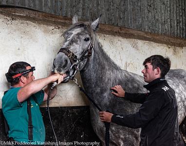 Dentist Visit at Cashel Equestrian