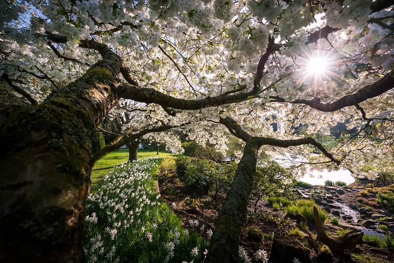 Spring in Little Malvern Court