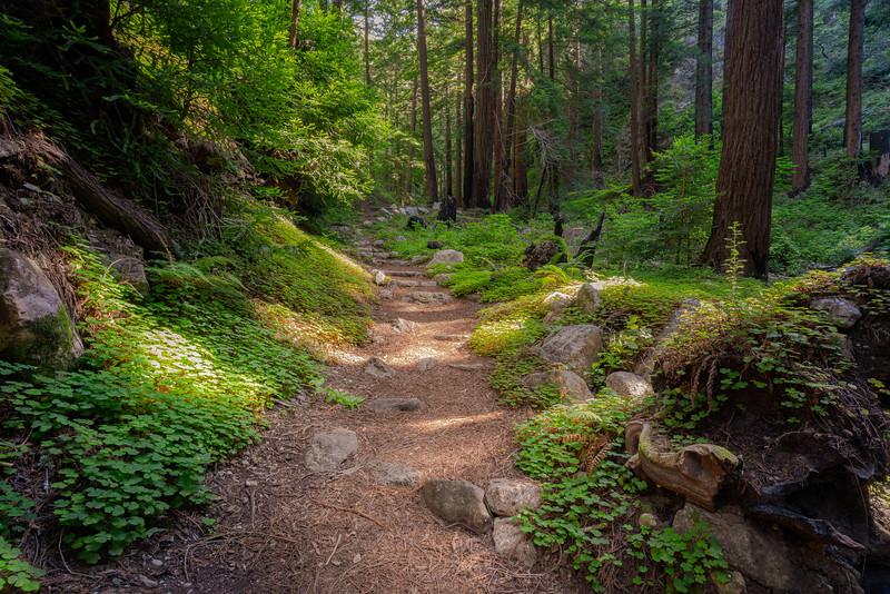 Redwood Forest, Big Sur