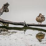Resting, Malibu Lagoon