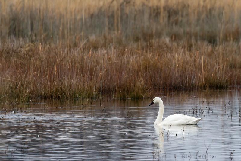 2015 Pocosin Lakes National Wildlife Refuge, North Carolina