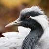 2015 Sylvan Heights Bird Park, Scotland Neck, North Carolina