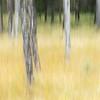 2017 Jasper National Park, Alberta, Canada