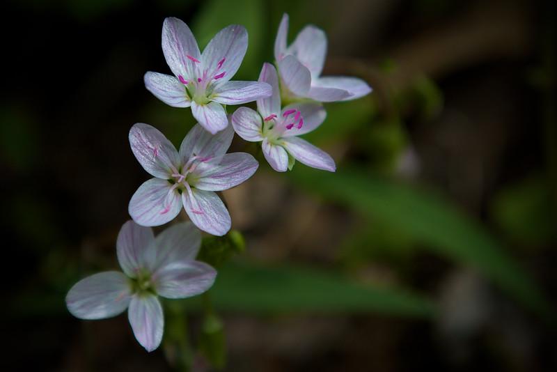 Wildflowers at Radnor Lake