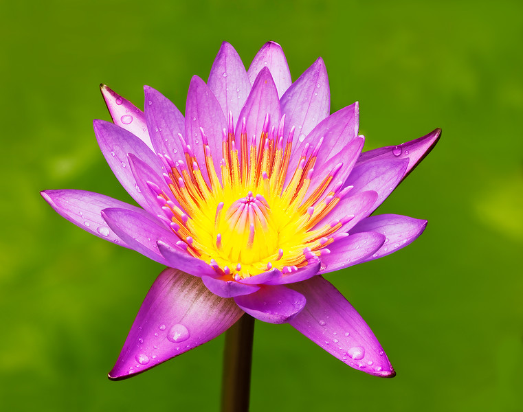 Water lily composite_0800_0807