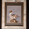 Northern Pintail 11x14 Birchbark Frame