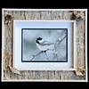 Black-capped Chickadee 8x10 Birchbark Frame