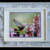 Hummingbird 11x14 Birchbark Frame