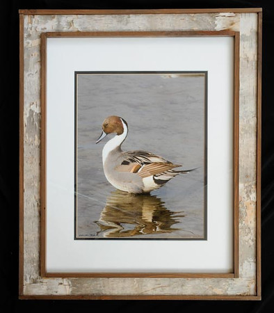 Northern Pintail 16x20 Birchbark Frame