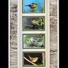 Warblers Birchbark Long Frame