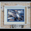 Piping Plover Chick 8x10 Birchbark Frame