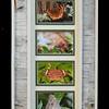Butterflies Birchbark Long Frame