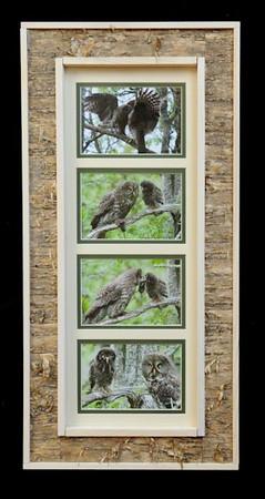 Owl Family Birchbark Long Frame