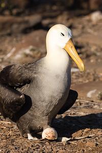 2016 Espanola, Galapagos Islands, Ecuador