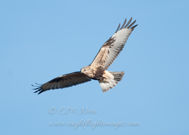 """Rough-legged Hawk © 2011 C. M. Neri Whitefish Point, MI RLHAWP!!  <div class=""""ss-paypal-button""""><div class=""""ss-paypal-add-to-cart-section""""><div class=""""ss-paypal-product-options""""><h4>Mat Sizes</h4><ul><li><a href=""""https://www.paypal.com/cgi-bin/webscr?cmd=_cart&business=T77V5VKCW4K2U&lc=US&item_name=Rough-legged%20Hawk%20%C2%A9%202011%20C.%20M.%20Neri%20Whitefish%20Point%2C%20MI%20RLHAWP!!&item_number=http%3A%2F%2Fwww.nightflightimages.com%2FGalleries-1%2FHawks%2Fi-F7NzJwz&button_subtype=products&no_note=0&cn=Add%20special%20instructions%20to%20the%20seller%3A&no_shipping=2&currency_code=USD&weight_unit=lbs&add=1&bn=PP-ShopCartBF%3Abtn_cart_SM.gif%3ANonHosted&on0=Mat%20Sizes&option_select0=5%20x%207&option_amount0=10.00&option_select1=8%20x%2010&option_amount1=18.00&option_select2=11%20x%2014&option_amount2=28.00&option_select3=card&option_amount3=4.00&option_index=0&charset=utf-8&submit=&os0=5%20x%207"""" target=""""paypal""""><span>5 x 7 $11.00 USD</span><img src=""""https://www.paypalobjects.com/en_US/i/btn/btn_cart_SM.gif""""></a></li><li><a href=""""https://www.paypal.com/cgi-bin/webscr?cmd=_cart&business=T77V5VKCW4K2U&lc=US&item_name=Rough-legged%20Hawk%20%C2%A9%202011%20C.%20M.%20Neri%20Whitefish%20Point%2C%20MI%20RLHAWP!!&item_number=http%3A%2F%2Fwww.nightflightimages.com%2FGalleries-1%2FHawks%2Fi-F7NzJwz&button_subtype=products&no_note=0&cn=Add%20special%20instructions%20to%20the%20seller%3A&no_shipping=2&currency_code=USD&weight_unit=lbs&add=1&bn=PP-ShopCartBF%3Abtn_cart_SM.gif%3ANonHosted&on0=Mat%20Sizes&option_select0=5%20x%207&option_amount0=10.00&option_select1=8%20x%2010&option_amount1=18.00&option_select2=11%20x%2014&option_amount2=28.00&option_select3=card&option_amount3=4.00&option_index=0&charset=utf-8&submit=&os0=8%20x%2010"""" target=""""paypal""""><span>8 x 10 $19.00 USD</span><img src=""""https://www.paypalobjects.com/en_US/i/btn/btn_cart_SM.gif""""></a></li><li><a href=""""https://www.paypal.com/cgi-bin/webscr?cmd=_cart&business=T77V5VKCW4K2U&lc=US&item_name=Rough-legged%20Hawk%"""