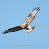 "Rough-legged Hawk © 2011 C. M. Neri Whitefish Point, MI RLHAWP!!  <div class=""ss-paypal-button""><div class=""ss-paypal-add-to-cart-section""><div class=""ss-paypal-product-options""><h4>Mat Sizes</h4><ul><li><a href=""https://www.paypal.com/cgi-bin/webscr?cmd=_cart&amp;business=T77V5VKCW4K2U&amp;lc=US&amp;item_name=Rough-legged%20Hawk%20%C2%A9%202011%20C.%20M.%20Neri%20Whitefish%20Point%2C%20MI%20RLHAWP!!&amp;item_number=http%3A%2F%2Fwww.nightflightimages.com%2FGalleries-1%2FHawks%2Fi-F7NzJwz&amp;button_subtype=products&amp;no_note=0&amp;cn=Add%20special%20instructions%20to%20the%20seller%3A&amp;no_shipping=2&amp;currency_code=USD&amp;weight_unit=lbs&amp;add=1&amp;bn=PP-ShopCartBF%3Abtn_cart_SM.gif%3ANonHosted&amp;on0=Mat%20Sizes&amp;option_select0=5%20x%207&amp;option_amount0=10.00&amp;option_select1=8%20x%2010&amp;option_amount1=18.00&amp;option_select2=11%20x%2014&amp;option_amount2=28.00&amp;option_select3=card&amp;option_amount3=4.00&amp;option_index=0&amp;charset=utf-8&amp;submit=&amp;os0=5%20x%207"" target=""paypal""><span>5 x 7 $11.00 USD</span><img src=""https://www.paypalobjects.com/en_US/i/btn/btn_cart_SM.gif""></a></li><li><a href=""https://www.paypal.com/cgi-bin/webscr?cmd=_cart&amp;business=T77V5VKCW4K2U&amp;lc=US&amp;item_name=Rough-legged%20Hawk%20%C2%A9%202011%20C.%20M.%20Neri%20Whitefish%20Point%2C%20MI%20RLHAWP!!&amp;item_number=http%3A%2F%2Fwww.nightflightimages.com%2FGalleries-1%2FHawks%2Fi-F7NzJwz&amp;button_subtype=products&amp;no_note=0&amp;cn=Add%20special%20instructions%20to%20the%20seller%3A&amp;no_shipping=2&amp;currency_code=USD&amp;weight_unit=lbs&amp;add=1&amp;bn=PP-ShopCartBF%3Abtn_cart_SM.gif%3ANonHosted&amp;on0=Mat%20Sizes&amp;option_select0=5%20x%207&amp;option_amount0=10.00&amp;option_select1=8%20x%2010&amp;option_amount1=18.00&amp;option_select2=11%20x%2014&amp;option_amount2=28.00&amp;option_select3=card&amp;option_amount3=4.00&amp;option_index=0&amp;charset=utf-8&amp;submit=&amp;os0=8%20x%2010"" target=""paypal""><span>8 x 10 $19.00 USD</span><img src=""https://www.paypalobjects.com/en_US/i/btn/btn_cart_SM.gif""></a></li><li><a href=""https://www.paypal.com/cgi-bin/webscr?cmd=_cart&amp;business=T77V5VKCW4K2U&amp;lc=US&amp;item_name=Rough-legged%20Hawk%20%C2%A9%202011%20C.%20M.%20Neri%20Whitefish%20Point%2C%20MI%20RLHAWP!!&amp;item_number=http%3A%2F%2Fwww.nightflightimages.com%2FGalleries-1%2FHawks%2Fi-F7NzJwz&amp;button_subtype=products&amp;no_note=0&amp;cn=Add%20special%20instructions%20to%20the%20seller%3A&amp;no_shipping=2&amp;currency_code=USD&amp;weight_unit=lbs&amp;add=1&amp;bn=PP-ShopCartBF%3Abtn_cart_SM.gif%3ANonHosted&amp;on0=Mat%20Sizes&amp;option_select0=5%20x%207&amp;option_amount0=10.00&amp;option_select1=8%20x%2010&amp;option_amount1=18.00&amp;option_select2=11%20x%2014&amp;option_amount2=28.00&amp;option_select3=card&amp;option_amount3=4.00&amp;option_index=0&amp;charset=utf-8&amp;submit=&amp;os0=11%20x%2014"" target=""paypal""><span>11 x 14 $29.00 USD</span><img src=""https://www.paypalobjects.com/en_US/i/btn/btn_cart_SM.gif""></a></li><li><a href=""https://www.paypal.com/cgi-bin/webscr?cmd=_cart&amp;business=T77V5VKCW4K2U&amp;lc=US&amp;item_name=Rough-legged%20Hawk%20%C2%A9%202011%20C.%20M.%20Neri%20Whitefish%20Point%2C%20MI%20RLHAWP!!&amp;item_number=http%3A%2F%2Fwww.nightflightimages.com%2FGalleries-1%2FHawks%2Fi-F7NzJwz&amp;button_subtype=products&amp;no_note=0&amp;cn=Add%20special%20instructions%20to%20the%20seller%3A&amp;no_shipping=2&amp;currency_code=USD&amp;weight_unit=lbs&amp;add=1&amp;bn=PP-ShopCartBF%3Abtn_cart_SM.gif%3ANonHosted&amp;on0=Mat%20Sizes&amp;option_select0=5%20x%207&amp;option_amount0=10.00&amp;option_select1=8%20x%2010&amp;option_amount1=18.00&amp;option_select2=11%20x%2014&amp;option_amount2=28.00&amp;option_select3=card&amp;option_amount3=4.00&amp;option_index=0&amp;charset=utf-8&amp;submit=&amp;os0=card"" target=""paypal""><span>card $5.00 USD</span><img src=""https://www.paypalobjects.com/en_US/i/btn/btn_cart_SM.gif""></a></li></ul></div></div> <div class=""ss-paypal-view-cart-section""><a href=""https://www.paypal.com/cgi-bin/webscr?cmd=_cart&amp;business=T77V5VKCW4K2U&amp;display=1&amp;item_name=Rough-legged%20Hawk%20%C2%A9%202011%20C.%20M.%20Neri%20Whitefish%20Point%2C%20MI%20RLHAWP!!&amp;item_number=http%3A%2F%2Fwww.nightflightimages.com%2FGalleries-1%2FHawks%2Fi-F7NzJwz&amp;charset=utf-8&amp;submit="" target=""paypal"" class=""ss-paypal-submit-button""><img src=""https://www.paypalobjects.com/en_US/i/btn/btn_viewcart_LG.gif""></a></div></div><div class=""ss-paypal-button-end""></div>"