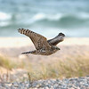 "Northern Goshawk © 2008 C. M. Neri. Whitefish Point, MI  <div class=""ss-paypal-button""><div class=""ss-paypal-add-to-cart-section""><div class=""ss-paypal-product-options""><h4>Mat Sizes</h4><ul><li><a href=""https://www.paypal.com/cgi-bin/webscr?cmd=_cart&amp;business=T77V5VKCW4K2U&amp;lc=US&amp;item_name=Northern%20Goshawk%20%C2%A9%202008%20C.%20M.%20Neri.%20Whitefish%20Point%2C%20MI&amp;item_number=http%3A%2F%2Fwww.nightflightimages.com%2FGalleries-1%2FHawks%2Fi-FqTkGxv&amp;button_subtype=products&amp;no_note=0&amp;cn=Add%20special%20instructions%20to%20the%20seller%3A&amp;no_shipping=2&amp;currency_code=USD&amp;weight_unit=lbs&amp;add=1&amp;bn=PP-ShopCartBF%3Abtn_cart_SM.gif%3ANonHosted&amp;on0=Mat%20Sizes&amp;option_select0=5%20x%207&amp;option_amount0=10.00&amp;option_select1=8%20x%2010&amp;option_amount1=18.00&amp;option_select2=11%20x%2014&amp;option_amount2=28.00&amp;option_select3=card&amp;option_amount3=4.00&amp;option_index=0&amp;charset=utf-8&amp;submit=&amp;os0=5%20x%207"" target=""paypal""><span>5 x 7 $11.00 USD</span><img src=""https://www.paypalobjects.com/en_US/i/btn/btn_cart_SM.gif""></a></li><li><a href=""https://www.paypal.com/cgi-bin/webscr?cmd=_cart&amp;business=T77V5VKCW4K2U&amp;lc=US&amp;item_name=Northern%20Goshawk%20%C2%A9%202008%20C.%20M.%20Neri.%20Whitefish%20Point%2C%20MI&amp;item_number=http%3A%2F%2Fwww.nightflightimages.com%2FGalleries-1%2FHawks%2Fi-FqTkGxv&amp;button_subtype=products&amp;no_note=0&amp;cn=Add%20special%20instructions%20to%20the%20seller%3A&amp;no_shipping=2&amp;currency_code=USD&amp;weight_unit=lbs&amp;add=1&amp;bn=PP-ShopCartBF%3Abtn_cart_SM.gif%3ANonHosted&amp;on0=Mat%20Sizes&amp;option_select0=5%20x%207&amp;option_amount0=10.00&amp;option_select1=8%20x%2010&amp;option_amount1=18.00&amp;option_select2=11%20x%2014&amp;option_amount2=28.00&amp;option_select3=card&amp;option_amount3=4.00&amp;option_index=0&amp;charset=utf-8&amp;submit=&amp;os0=8%20x%2010"" target=""paypal""><span>8 x 10 $19.00 USD</span><img src=""https://www.paypalobjects.com/en_US/i/btn/btn_cart_SM.gif""></a></li><li><a href=""https://www.paypal.com/cgi-bin/webscr?cmd=_cart&amp;business=T77V5VKCW4K2U&amp;lc=US&amp;item_name=Northern%20Goshawk%20%C2%A9%202008%20C.%20M.%20Neri.%20Whitefish%20Point%2C%20MI&amp;item_number=http%3A%2F%2Fwww.nightflightimages.com%2FGalleries-1%2FHawks%2Fi-FqTkGxv&amp;button_subtype=products&amp;no_note=0&amp;cn=Add%20special%20instructions%20to%20the%20seller%3A&amp;no_shipping=2&amp;currency_code=USD&amp;weight_unit=lbs&amp;add=1&amp;bn=PP-ShopCartBF%3Abtn_cart_SM.gif%3ANonHosted&amp;on0=Mat%20Sizes&amp;option_select0=5%20x%207&amp;option_amount0=10.00&amp;option_select1=8%20x%2010&amp;option_amount1=18.00&amp;option_select2=11%20x%2014&amp;option_amount2=28.00&amp;option_select3=card&amp;option_amount3=4.00&amp;option_index=0&amp;charset=utf-8&amp;submit=&amp;os0=11%20x%2014"" target=""paypal""><span>11 x 14 $29.00 USD</span><img src=""https://www.paypalobjects.com/en_US/i/btn/btn_cart_SM.gif""></a></li><li><a href=""https://www.paypal.com/cgi-bin/webscr?cmd=_cart&amp;business=T77V5VKCW4K2U&amp;lc=US&amp;item_name=Northern%20Goshawk%20%C2%A9%202008%20C.%20M.%20Neri.%20Whitefish%20Point%2C%20MI&amp;item_number=http%3A%2F%2Fwww.nightflightimages.com%2FGalleries-1%2FHawks%2Fi-FqTkGxv&amp;button_subtype=products&amp;no_note=0&amp;cn=Add%20special%20instructions%20to%20the%20seller%3A&amp;no_shipping=2&amp;currency_code=USD&amp;weight_unit=lbs&amp;add=1&amp;bn=PP-ShopCartBF%3Abtn_cart_SM.gif%3ANonHosted&amp;on0=Mat%20Sizes&amp;option_select0=5%20x%207&amp;option_amount0=10.00&amp;option_select1=8%20x%2010&amp;option_amount1=18.00&amp;option_select2=11%20x%2014&amp;option_amount2=28.00&amp;option_select3=card&amp;option_amount3=4.00&amp;option_index=0&amp;charset=utf-8&amp;submit=&amp;os0=card"" target=""paypal""><span>card $5.00 USD</span><img src=""https://www.paypalobjects.com/en_US/i/btn/btn_cart_SM.gif""></a></li></ul></div></div> <div class=""ss-paypal-view-cart-section""><a href=""https://www.paypal.com/cgi-bin/webscr?cmd=_cart&amp;business=T77V5VKCW4K2U&amp;display=1&amp;item_name=Northern%20Goshawk%20%C2%A9%202008%20C.%20M.%20Neri.%20Whitefish%20Point%2C%20MI&amp;item_number=http%3A%2F%2Fwww.nightflightimages.com%2FGalleries-1%2FHawks%2Fi-FqTkGxv&amp;charset=utf-8&amp;submit="" target=""paypal"" class=""ss-paypal-submit-button""><img src=""https://www.paypalobjects.com/en_US/i/btn/btn_viewcart_LG.gif""></a></div></div><div class=""ss-paypal-button-end""></div>"