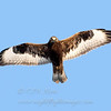 "Rough-legged Hawk © 2006 C. M. Neri. Cape Vincent, NY  <div class=""ss-paypal-button""> <div class=""ss-paypal-add-to-cart-section""><div class=""ss-paypal-product-options""> <h4>Mat Sizes</h4> <ul> <li><a href=""https://www.paypal.com/cgi-bin/webscr?cmd=_cart&business=T77V5VKCW4K2U&lc=US&item_name=Rough-legged%20Hawk%20%C2%A9%202006%20C.%20M.%20Neri.%20Cape%20Vincent%2C%20NY&item_number=http%3A%2F%2Fwww.nightflightimages.com%2FGalleries-1%2FHawks%2Fi-HWL3QDg&button_subtype=products&no_note=0&cn=Add%20special%20instructions%20to%20the%20seller%3A&no_shipping=2&currency_code=USD&weight_unit=lbs&add=1&bn=PP-ShopCartBF%3Abtn_cart_SM.gif%3ANonHosted&on0=Mat%20Sizes&option_select0=5%20x%207&option_amount0=10.00&option_select1=8%20x%2010&option_amount1=18.00&option_select2=11%20x%2014&option_amount2=28.00&option_select3=card&option_amount3=4.00&option_index=0&submit=&os0=5%20x%207"" target=""paypal""><span>5 x 7 $10.00 USD</span><img src=""https://www.paypalobjects.com/en_US/i/btn/btn_cart_SM.gif""></a></li> <li><a href=""https://www.paypal.com/cgi-bin/webscr?cmd=_cart&business=T77V5VKCW4K2U&lc=US&item_name=Rough-legged%20Hawk%20%C2%A9%202006%20C.%20M.%20Neri.%20Cape%20Vincent%2C%20NY&item_number=http%3A%2F%2Fwww.nightflightimages.com%2FGalleries-1%2FHawks%2Fi-HWL3QDg&button_subtype=products&no_note=0&cn=Add%20special%20instructions%20to%20the%20seller%3A&no_shipping=2&currency_code=USD&weight_unit=lbs&add=1&bn=PP-ShopCartBF%3Abtn_cart_SM.gif%3ANonHosted&on0=Mat%20Sizes&option_select0=5%20x%207&option_amount0=10.00&option_select1=8%20x%2010&option_amount1=18.00&option_select2=11%20x%2014&option_amount2=28.00&option_select3=card&option_amount3=4.00&option_index=0&submit=&os0=8%20x%2010"" target=""paypal""><span>8 x 10 $18.00 USD</span><img src=""https://www.paypalobjects.com/en_US/i/btn/btn_cart_SM.gif""></a></li> <li><a href=""https://www.paypal.com/cgi-bin/webscr?cmd=_cart&business=T77V5VKCW4K2U&lc=US&item_name=Rough-legged%20Hawk%20%C2%A9%202006%20C.%20M.%20Neri.%20Cape%20Vincent%2C%20NY&item_number=http%3A%2F%2Fwww.nightflightimages.com%2FGalleries-1%2FHawks%2Fi-HWL3QDg&button_subtype=products&no_note=0&cn=Add%20special%20instructions%20to%20the%20seller%3A&no_shipping=2&currency_code=USD&weight_unit=lbs&add=1&bn=PP-ShopCartBF%3Abtn_cart_SM.gif%3ANonHosted&on0=Mat%20Sizes&option_select0=5%20x%207&option_amount0=10.00&option_select1=8%20x%2010&option_amount1=18.00&option_select2=11%20x%2014&option_amount2=28.00&option_select3=card&option_amount3=4.00&option_index=0&submit=&os0=11%20x%2014"" target=""paypal""><span>11 x 14 $28.00 USD</span><img src=""https://www.paypalobjects.com/en_US/i/btn/btn_cart_SM.gif""></a></li> <li><a href=""https://www.paypal.com/cgi-bin/webscr?cmd=_cart&business=T77V5VKCW4K2U&lc=US&item_name=Rough-legged%20Hawk%20%C2%A9%202006%20C.%20M.%20Neri.%20Cape%20Vincent%2C%20NY&item_number=http%3A%2F%2Fwww.nightflightimages.com%2FGalleries-1%2FHawks%2Fi-HWL3QDg&button_subtype=products&no_note=0&cn=Add%20special%20instructions%20to%20the%20seller%3A&no_shipping=2&currency_code=USD&weight_unit=lbs&add=1&bn=PP-ShopCartBF%3Abtn_cart_SM.gif%3ANonHosted&on0=Mat%20Sizes&option_select0=5%20x%207&option_amount0=10.00&option_select1=8%20x%2010&option_amount1=18.00&option_select2=11%20x%2014&option_amount2=28.00&option_select3=card&option_amount3=4.00&option_index=0&submit=&os0=card"" target=""paypal""><span>card $4.00 USD</span><img src=""https://www.paypalobjects.com/en_US/i/btn/btn_cart_SM.gif""></a></li> </ul> </div></div> <div class=""ss-paypal-view-cart-section""><a href=""https://www.paypal.com/cgi-bin/webscr?cmd=_cart&business=T77V5VKCW4K2U&display=1&item_name=Rough-legged%20Hawk%20%C2%A9%202006%20C.%20M.%20Neri.%20Cape%20Vincent%2C%20NY&item_number=http%3A%2F%2Fwww.nightflightimages.com%2FGalleries-1%2FHawks%2Fi-HWL3QDg&submit="" target=""paypal"" class=""ss-paypal-submit-button""><img src=""https://www.paypalobjects.com/en_US/i/btn/btn_viewcart_LG.gif""></a></div> </div><div class=""ss-paypal-button-end"" style=""""></div>"