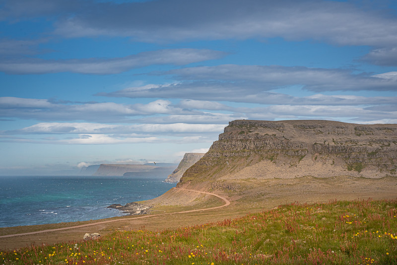 Látrabjarg cliffs, Iceland