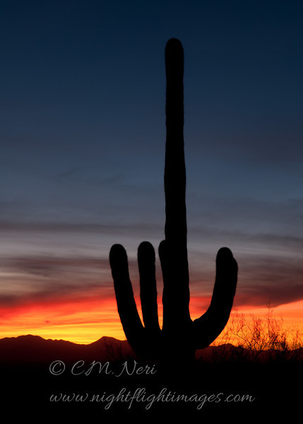 """Sunset and Saguaro © 2011 C. M. Neri Saguaro National Park, AZ SAGUARO  <div class=""""ss-paypal-button""""><div class=""""ss-paypal-add-to-cart-section""""><div class=""""ss-paypal-product-options""""><h4>Mat Sizes</h4><ul><li><a href=""""https://www.paypal.com/cgi-bin/webscr?cmd=_cart&business=T77V5VKCW4K2U&lc=US&item_name=Sunset%20and%20Saguaro%20%C2%A9%202011%20C.%20M.%20Neri%20Saguaro%20National%20Park%2C%20AZ%20SAGUARO&item_number=http%3A%2F%2Fwww.nightflightimages.com%2FGalleries-1%2FTravels%2Fi-xmw7ZQT&button_subtype=products&no_note=0&cn=Add%20special%20instructions%20to%20the%20seller%3A&no_shipping=2&currency_code=USD&weight_unit=lbs&add=1&bn=PP-ShopCartBF%3Abtn_cart_SM.gif%3ANonHosted&on0=Mat%20Sizes&option_select0=5%20x%207&option_amount0=10.00&option_select1=8%20x%2010&option_amount1=18.00&option_select2=11%20x%2014&option_amount2=28.00&option_select3=card&option_amount3=4.00&option_index=0&charset=utf-8&submit=&os0=5%20x%207"""" target=""""paypal""""><span>5 x 7 $11.00 USD</span><img src=""""https://www.paypalobjects.com/en_US/i/btn/btn_cart_SM.gif""""></a></li><li><a href=""""https://www.paypal.com/cgi-bin/webscr?cmd=_cart&business=T77V5VKCW4K2U&lc=US&item_name=Sunset%20and%20Saguaro%20%C2%A9%202011%20C.%20M.%20Neri%20Saguaro%20National%20Park%2C%20AZ%20SAGUARO&item_number=http%3A%2F%2Fwww.nightflightimages.com%2FGalleries-1%2FTravels%2Fi-xmw7ZQT&button_subtype=products&no_note=0&cn=Add%20special%20instructions%20to%20the%20seller%3A&no_shipping=2&currency_code=USD&weight_unit=lbs&add=1&bn=PP-ShopCartBF%3Abtn_cart_SM.gif%3ANonHosted&on0=Mat%20Sizes&option_select0=5%20x%207&option_amount0=10.00&option_select1=8%20x%2010&option_amount1=18.00&option_select2=11%20x%2014&option_amount2=28.00&option_select3=card&option_amount3=4.00&option_index=0&charset=utf-8&submit=&os0=8%20x%2010"""" target=""""paypal""""><span>8 x 10 $19.00 USD</span><img src=""""https://www.paypalobjects.com/en_US/i/btn/btn_cart_SM.gif""""></a></li><li><a href=""""https://www.paypal.com/cgi-bin/webscr?cmd=_cart&business=T77V5VKCW4K2U&lc=US&"""