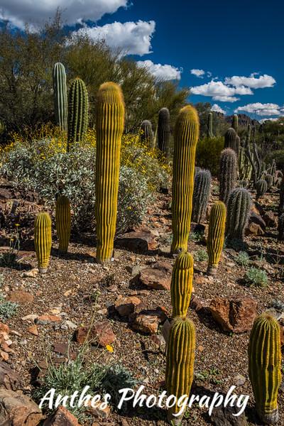 Arizona Sonora Desert Museum, Arizona