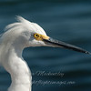 "Snowy Egret © 2010 Nova Mackentley South Padre Island, TX SEH  <div class=""ss-paypal-button""> <div class=""ss-paypal-add-to-cart-section""><div class=""ss-paypal-product-options""> <h4>Mat Sizes</h4> <ul> <li><a href=""https://www.paypal.com/cgi-bin/webscr?cmd=_cart&business=T77V5VKCW4K2U&lc=US&item_name=Snowy%20Egret%20%C2%A9%202010%20Nova%20Mackentley%20South%20Padre%20Island%2C%20TX%20SEH&item_number=http%3A%2F%2Fwww.nightflightimages.com%2FGalleries-1%2FLower-Rio-Grande-Valley-TX%2Fi-96ZVDx7&button_subtype=products&no_note=0&cn=Add%20special%20instructions%20to%20the%20seller%3A&no_shipping=2&currency_code=USD&weight_unit=lbs&add=1&bn=PP-ShopCartBF%3Abtn_cart_SM.gif%3ANonHosted&on0=Mat%20Sizes&option_select0=5%20x%207&option_amount0=10.00&option_select1=8%20x%2010&option_amount1=18.00&option_select2=11%20x%2014&option_amount2=28.00&option_select3=card&option_amount3=4.00&option_index=0&submit=&os0=5%20x%207"" target=""paypal""><span>5 x 7 $10.00 USD</span><img src=""https://www.paypalobjects.com/en_US/i/btn/btn_cart_SM.gif""></a></li> <li><a href=""https://www.paypal.com/cgi-bin/webscr?cmd=_cart&business=T77V5VKCW4K2U&lc=US&item_name=Snowy%20Egret%20%C2%A9%202010%20Nova%20Mackentley%20South%20Padre%20Island%2C%20TX%20SEH&item_number=http%3A%2F%2Fwww.nightflightimages.com%2FGalleries-1%2FLower-Rio-Grande-Valley-TX%2Fi-96ZVDx7&button_subtype=products&no_note=0&cn=Add%20special%20instructions%20to%20the%20seller%3A&no_shipping=2&currency_code=USD&weight_unit=lbs&add=1&bn=PP-ShopCartBF%3Abtn_cart_SM.gif%3ANonHosted&on0=Mat%20Sizes&option_select0=5%20x%207&option_amount0=10.00&option_select1=8%20x%2010&option_amount1=18.00&option_select2=11%20x%2014&option_amount2=28.00&option_select3=card&option_amount3=4.00&option_index=0&submit=&os0=8%20x%2010"" target=""paypal""><span>8 x 10 $18.00 USD</span><img src=""https://www.paypalobjects.com/en_US/i/btn/btn_cart_SM.gif""></a></li> <li><a href=""https://www.paypal.com/cgi-bin/webscr?cmd=_cart&business=T77V5VKCW4K2U&lc=US&item_name=Snowy%20Egret%20%C2%A9%202010%20Nova%20Mackentley%20South%20Padre%20Island%2C%20TX%20SEH&item_number=http%3A%2F%2Fwww.nightflightimages.com%2FGalleries-1%2FLower-Rio-Grande-Valley-TX%2Fi-96ZVDx7&button_subtype=products&no_note=0&cn=Add%20special%20instructions%20to%20the%20seller%3A&no_shipping=2&currency_code=USD&weight_unit=lbs&add=1&bn=PP-ShopCartBF%3Abtn_cart_SM.gif%3ANonHosted&on0=Mat%20Sizes&option_select0=5%20x%207&option_amount0=10.00&option_select1=8%20x%2010&option_amount1=18.00&option_select2=11%20x%2014&option_amount2=28.00&option_select3=card&option_amount3=4.00&option_index=0&submit=&os0=11%20x%2014"" target=""paypal""><span>11 x 14 $28.00 USD</span><img src=""https://www.paypalobjects.com/en_US/i/btn/btn_cart_SM.gif""></a></li> <li><a href=""https://www.paypal.com/cgi-bin/webscr?cmd=_cart&business=T77V5VKCW4K2U&lc=US&item_name=Snowy%20Egret%20%C2%A9%202010%20Nova%20Mackentley%20South%20Padre%20Island%2C%20TX%20SEH&item_number=http%3A%2F%2Fwww.nightflightimages.com%2FGalleries-1%2FLower-Rio-Grande-Valley-TX%2Fi-96ZVDx7&button_subtype=products&no_note=0&cn=Add%20special%20instructions%20to%20the%20seller%3A&no_shipping=2&currency_code=USD&weight_unit=lbs&add=1&bn=PP-ShopCartBF%3Abtn_cart_SM.gif%3ANonHosted&on0=Mat%20Sizes&option_select0=5%20x%207&option_amount0=10.00&option_select1=8%20x%2010&option_amount1=18.00&option_select2=11%20x%2014&option_amount2=28.00&option_select3=card&option_amount3=4.00&option_index=0&submit=&os0=card"" target=""paypal""><span>card $4.00 USD</span><img src=""https://www.paypalobjects.com/en_US/i/btn/btn_cart_SM.gif""></a></li> </ul> </div></div> <div class=""ss-paypal-view-cart-section""><a href=""https://www.paypal.com/cgi-bin/webscr?cmd=_cart&business=T77V5VKCW4K2U&display=1&item_name=Snowy%20Egret%20%C2%A9%202010%20Nova%20Mackentley%20South%20Padre%20Island%2C%20TX%20SEH&item_number=http%3A%2F%2Fwww.nightflightimages.com%2FGalleries-1%2FLower-Rio-Grande-Valley-TX%2Fi-96ZVDx7&submit="" target=""paypal"" class=""ss-paypal-submit-button""><img src=""https://www.paypalobjects.com/en_US/i/btn/btn_viewcart_LG.gif""></a></div> </div><div class=""ss-paypal-button-end"" style=""""></div>"