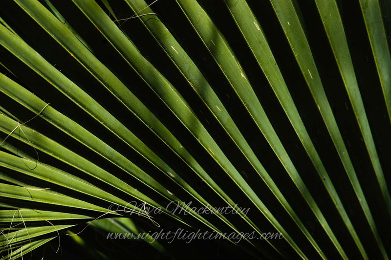 "Sabal Palm © 2008 Nova Mackentley Sabal Palm SP, TX *now closed due to the border wall* SPA  <div class=""ss-paypal-button""><div class=""ss-paypal-add-to-cart-section""><div class=""ss-paypal-product-options""><h4>Mat Sizes</h4><ul><li><a href=""https://www.paypal.com/cgi-bin/webscr?cmd=_cart&amp;business=T77V5VKCW4K2U&amp;lc=US&amp;item_name=Sabal%20Palm%20%C2%A9%202008%20Nova%20Mackentley%20Sabal%20Palm%20SP%2C%20TX%20*now%20closed%20due%20to%20the%20border%20wall*%20SPA&amp;item_number=http%3A%2F%2Fwww.nightflightimages.com%2FGalleries-1%2FImpressions%2Fi-PCVpVjJ&amp;button_subtype=products&amp;no_note=0&amp;cn=Add%20special%20instructions%20to%20the%20seller%3A&amp;no_shipping=2&amp;currency_code=USD&amp;weight_unit=lbs&amp;add=1&amp;bn=PP-ShopCartBF%3Abtn_cart_SM.gif%3ANonHosted&amp;on0=Mat%20Sizes&amp;option_select0=5%20x%207&amp;option_amount0=10.00&amp;option_select1=8%20x%2010&amp;option_amount1=18.00&amp;option_select2=11%20x%2014&amp;option_amount2=28.00&amp;option_select3=card&amp;option_amount3=4.00&amp;option_index=0&amp;charset=utf-8&amp;submit=&amp;os0=5%20x%207"" target=""paypal""><span>5 x 7 $11.00 USD</span><img src=""https://www.paypalobjects.com/en_US/i/btn/btn_cart_SM.gif""></a></li><li><a href=""https://www.paypal.com/cgi-bin/webscr?cmd=_cart&amp;business=T77V5VKCW4K2U&amp;lc=US&amp;item_name=Sabal%20Palm%20%C2%A9%202008%20Nova%20Mackentley%20Sabal%20Palm%20SP%2C%20TX%20*now%20closed%20due%20to%20the%20border%20wall*%20SPA&amp;item_number=http%3A%2F%2Fwww.nightflightimages.com%2FGalleries-1%2FImpressions%2Fi-PCVpVjJ&amp;button_subtype=products&amp;no_note=0&amp;cn=Add%20special%20instructions%20to%20the%20seller%3A&amp;no_shipping=2&amp;currency_code=USD&amp;weight_unit=lbs&amp;add=1&amp;bn=PP-ShopCartBF%3Abtn_cart_SM.gif%3ANonHosted&amp;on0=Mat%20Sizes&amp;option_select0=5%20x%207&amp;option_amount0=10.00&amp;option_select1=8%20x%2010&amp;option_amount1=18.00&amp;option_select2=11%20x%2014&amp;option_amount2=28.00&amp;option_select3=card&amp;option_amount3=4.00&amp;option_index=0&amp;charset=utf-8&amp;submit=&amp;os0=8%20x%2010"" target=""paypal""><span>8 x 10 $19.00 USD</span><img src=""https://www.paypalobjects.com/en_US/i/btn/btn_cart_SM.gif""></a></li><li><a href=""https://www.paypal.com/cgi-bin/webscr?cmd=_cart&amp;business=T77V5VKCW4K2U&amp;lc=US&amp;item_name=Sabal%20Palm%20%C2%A9%202008%20Nova%20Mackentley%20Sabal%20Palm%20SP%2C%20TX%20*now%20closed%20due%20to%20the%20border%20wall*%20SPA&amp;item_number=http%3A%2F%2Fwww.nightflightimages.com%2FGalleries-1%2FImpressions%2Fi-PCVpVjJ&amp;button_subtype=products&amp;no_note=0&amp;cn=Add%20special%20instructions%20to%20the%20seller%3A&amp;no_shipping=2&amp;currency_code=USD&amp;weight_unit=lbs&amp;add=1&amp;bn=PP-ShopCartBF%3Abtn_cart_SM.gif%3ANonHosted&amp;on0=Mat%20Sizes&amp;option_select0=5%20x%207&amp;option_amount0=10.00&amp;option_select1=8%20x%2010&amp;option_amount1=18.00&amp;option_select2=11%20x%2014&amp;option_amount2=28.00&amp;option_select3=card&amp;option_amount3=4.00&amp;option_index=0&amp;charset=utf-8&amp;submit=&amp;os0=11%20x%2014"" target=""paypal""><span>11 x 14 $29.00 USD</span><img src=""https://www.paypalobjects.com/en_US/i/btn/btn_cart_SM.gif""></a></li><li><a href=""https://www.paypal.com/cgi-bin/webscr?cmd=_cart&amp;business=T77V5VKCW4K2U&amp;lc=US&amp;item_name=Sabal%20Palm%20%C2%A9%202008%20Nova%20Mackentley%20Sabal%20Palm%20SP%2C%20TX%20*now%20closed%20due%20to%20the%20border%20wall*%20SPA&amp;item_number=http%3A%2F%2Fwww.nightflightimages.com%2FGalleries-1%2FImpressions%2Fi-PCVpVjJ&amp;button_subtype=products&amp;no_note=0&amp;cn=Add%20special%20instructions%20to%20the%20seller%3A&amp;no_shipping=2&amp;currency_code=USD&amp;weight_unit=lbs&amp;add=1&amp;bn=PP-ShopCartBF%3Abtn_cart_SM.gif%3ANonHosted&amp;on0=Mat%20Sizes&amp;option_select0=5%20x%207&amp;option_amount0=10.00&amp;option_select1=8%20x%2010&amp;option_amount1=18.00&amp;option_select2=11%20x%2014&amp;option_amount2=28.00&amp;option_select3=card&amp;option_amount3=4.00&amp;option_index=0&amp;charset=utf-8&amp;submit=&amp;os0=card"" target=""paypal""><span>card $5.00 USD</span><img src=""https://www.paypalobjects.com/en_US/i/btn/btn_cart_SM.gif""></a></li></ul></div></div> <div class=""ss-paypal-view-cart-section""><a href=""https://www.paypal.com/cgi-bin/webscr?cmd=_cart&amp;business=T77V5VKCW4K2U&amp;display=1&amp;item_name=Sabal%20Palm%20%C2%A9%202008%20Nova%20Mackentley%20Sabal%20Palm%20SP%2C%20TX%20*now%20closed%20due%20to%20the%20border%20wall*%20SPA&amp;item_number=http%3A%2F%2Fwww.nightflightimages.com%2FGalleries-1%2FImpressions%2Fi-PCVpVjJ&amp;charset=utf-8&amp;submit="" target=""paypal"" class=""ss-paypal-submit-button""><img src=""https://www.paypalobjects.com/en_US/i/btn/btn_viewcart_LG.gif""></a></div></div><div class=""ss-paypal-button-end""></div>"