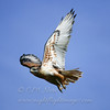 "Ferruginous Hawk © 2002 C. M.Neri Cache Valley, UT FEHAUT  <div class=""ss-paypal-button""><div class=""ss-paypal-add-to-cart-section""><div class=""ss-paypal-product-options""><h4>Mat Sizes</h4><ul><li><a href=""https://www.paypal.com/cgi-bin/webscr?cmd=_cart&amp;business=T77V5VKCW4K2U&amp;lc=US&amp;item_name=Ferruginous%20Hawk%20%C2%A9%202002%20C.%20M.Neri%20Cache%20Valley%2C%20UT%20FEHAUT&amp;item_number=http%3A%2F%2Fwww.nightflightimages.com%2FGalleries-1%2FHawks%2Fi-wL4m8nH&amp;button_subtype=products&amp;no_note=0&amp;cn=Add%20special%20instructions%20to%20the%20seller%3A&amp;no_shipping=2&amp;currency_code=USD&amp;weight_unit=lbs&amp;add=1&amp;bn=PP-ShopCartBF%3Abtn_cart_SM.gif%3ANonHosted&amp;on0=Mat%20Sizes&amp;option_select0=5%20x%207&amp;option_amount0=10.00&amp;option_select1=8%20x%2010&amp;option_amount1=18.00&amp;option_select2=11%20x%2014&amp;option_amount2=28.00&amp;option_select3=card&amp;option_amount3=4.00&amp;option_index=0&amp;charset=utf-8&amp;submit=&amp;os0=5%20x%207"" target=""paypal""><span>5 x 7 $11.00 USD</span><img src=""https://www.paypalobjects.com/en_US/i/btn/btn_cart_SM.gif""></a></li><li><a href=""https://www.paypal.com/cgi-bin/webscr?cmd=_cart&amp;business=T77V5VKCW4K2U&amp;lc=US&amp;item_name=Ferruginous%20Hawk%20%C2%A9%202002%20C.%20M.Neri%20Cache%20Valley%2C%20UT%20FEHAUT&amp;item_number=http%3A%2F%2Fwww.nightflightimages.com%2FGalleries-1%2FHawks%2Fi-wL4m8nH&amp;button_subtype=products&amp;no_note=0&amp;cn=Add%20special%20instructions%20to%20the%20seller%3A&amp;no_shipping=2&amp;currency_code=USD&amp;weight_unit=lbs&amp;add=1&amp;bn=PP-ShopCartBF%3Abtn_cart_SM.gif%3ANonHosted&amp;on0=Mat%20Sizes&amp;option_select0=5%20x%207&amp;option_amount0=10.00&amp;option_select1=8%20x%2010&amp;option_amount1=18.00&amp;option_select2=11%20x%2014&amp;option_amount2=28.00&amp;option_select3=card&amp;option_amount3=4.00&amp;option_index=0&amp;charset=utf-8&amp;submit=&amp;os0=8%20x%2010"" target=""paypal""><span>8 x 10 $19.00 USD</span><img src=""https://www.paypalobjects.com/en_US/i/btn/btn_cart_SM.gif""></a></li><li><a href=""https://www.paypal.com/cgi-bin/webscr?cmd=_cart&amp;business=T77V5VKCW4K2U&amp;lc=US&amp;item_name=Ferruginous%20Hawk%20%C2%A9%202002%20C.%20M.Neri%20Cache%20Valley%2C%20UT%20FEHAUT&amp;item_number=http%3A%2F%2Fwww.nightflightimages.com%2FGalleries-1%2FHawks%2Fi-wL4m8nH&amp;button_subtype=products&amp;no_note=0&amp;cn=Add%20special%20instructions%20to%20the%20seller%3A&amp;no_shipping=2&amp;currency_code=USD&amp;weight_unit=lbs&amp;add=1&amp;bn=PP-ShopCartBF%3Abtn_cart_SM.gif%3ANonHosted&amp;on0=Mat%20Sizes&amp;option_select0=5%20x%207&amp;option_amount0=10.00&amp;option_select1=8%20x%2010&amp;option_amount1=18.00&amp;option_select2=11%20x%2014&amp;option_amount2=28.00&amp;option_select3=card&amp;option_amount3=4.00&amp;option_index=0&amp;charset=utf-8&amp;submit=&amp;os0=11%20x%2014"" target=""paypal""><span>11 x 14 $29.00 USD</span><img src=""https://www.paypalobjects.com/en_US/i/btn/btn_cart_SM.gif""></a></li><li><a href=""https://www.paypal.com/cgi-bin/webscr?cmd=_cart&amp;business=T77V5VKCW4K2U&amp;lc=US&amp;item_name=Ferruginous%20Hawk%20%C2%A9%202002%20C.%20M.Neri%20Cache%20Valley%2C%20UT%20FEHAUT&amp;item_number=http%3A%2F%2Fwww.nightflightimages.com%2FGalleries-1%2FHawks%2Fi-wL4m8nH&amp;button_subtype=products&amp;no_note=0&amp;cn=Add%20special%20instructions%20to%20the%20seller%3A&amp;no_shipping=2&amp;currency_code=USD&amp;weight_unit=lbs&amp;add=1&amp;bn=PP-ShopCartBF%3Abtn_cart_SM.gif%3ANonHosted&amp;on0=Mat%20Sizes&amp;option_select0=5%20x%207&amp;option_amount0=10.00&amp;option_select1=8%20x%2010&amp;option_amount1=18.00&amp;option_select2=11%20x%2014&amp;option_amount2=28.00&amp;option_select3=card&amp;option_amount3=4.00&amp;option_index=0&amp;charset=utf-8&amp;submit=&amp;os0=card"" target=""paypal""><span>card $5.00 USD</span><img src=""https://www.paypalobjects.com/en_US/i/btn/btn_cart_SM.gif""></a></li></ul></div></div> <div class=""ss-paypal-view-cart-section""><a href=""https://www.paypal.com/cgi-bin/webscr?cmd=_cart&amp;business=T77V5VKCW4K2U&amp;display=1&amp;item_name=Ferruginous%20Hawk%20%C2%A9%202002%20C.%20M.Neri%20Cache%20Valley%2C%20UT%20FEHAUT&amp;item_number=http%3A%2F%2Fwww.nightflightimages.com%2FGalleries-1%2FHawks%2Fi-wL4m8nH&amp;charset=utf-8&amp;submit="" target=""paypal"" class=""ss-paypal-submit-button""><img src=""https://www.paypalobjects.com/en_US/i/btn/btn_viewcart_LG.gif""></a></div></div><div class=""ss-paypal-button-end""></div>"