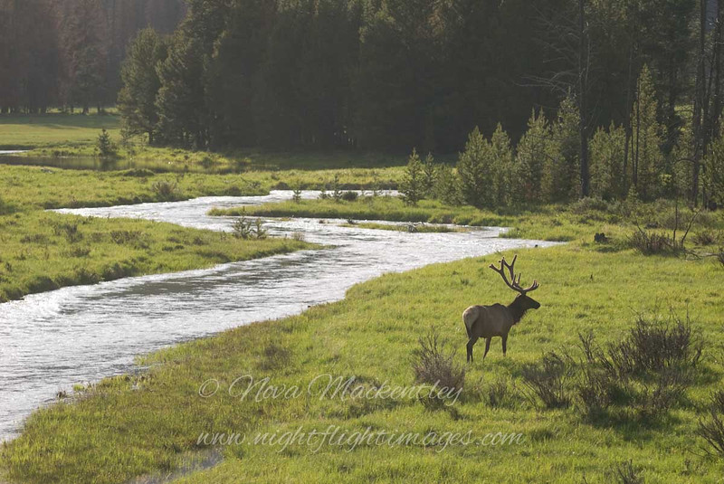 "Elk &amp; River © 2009 Nova Mackentley Rocky Mtn NP, CO EWR  <div class=""ss-paypal-button""><div class=""ss-paypal-add-to-cart-section""><div class=""ss-paypal-product-options""><h4>Mat Sizes</h4><ul><li><a href=""https://www.paypal.com/cgi-bin/webscr?cmd=_cart&amp;business=T77V5VKCW4K2U&amp;lc=US&amp;item_name=Elk%20%26amp%3B%20River%20%C2%A9%202009%20Nova%20Mackentley%20Rocky%20Mtn%20NP%2C%20CO%20EWR&amp;item_number=http%3A%2F%2Fwww.nightflightimages.com%2FGalleries-1%2FTravels%2Fi-2K42T7F&amp;button_subtype=products&amp;no_note=0&amp;cn=Add%20special%20instructions%20to%20the%20seller%3A&amp;no_shipping=2&amp;currency_code=USD&amp;weight_unit=lbs&amp;add=1&amp;bn=PP-ShopCartBF%3Abtn_cart_SM.gif%3ANonHosted&amp;on0=Mat%20Sizes&amp;option_select0=5%20x%207&amp;option_amount0=10.00&amp;option_select1=8%20x%2010&amp;option_amount1=18.00&amp;option_select2=11%20x%2014&amp;option_amount2=28.00&amp;option_select3=card&amp;option_amount3=4.00&amp;option_index=0&amp;charset=utf-8&amp;submit=&amp;os0=5%20x%207"" target=""paypal""><span>5 x 7 $11.00 USD</span><img src=""https://www.paypalobjects.com/en_US/i/btn/btn_cart_SM.gif""></a></li><li><a href=""https://www.paypal.com/cgi-bin/webscr?cmd=_cart&amp;business=T77V5VKCW4K2U&amp;lc=US&amp;item_name=Elk%20%26amp%3B%20River%20%C2%A9%202009%20Nova%20Mackentley%20Rocky%20Mtn%20NP%2C%20CO%20EWR&amp;item_number=http%3A%2F%2Fwww.nightflightimages.com%2FGalleries-1%2FTravels%2Fi-2K42T7F&amp;button_subtype=products&amp;no_note=0&amp;cn=Add%20special%20instructions%20to%20the%20seller%3A&amp;no_shipping=2&amp;currency_code=USD&amp;weight_unit=lbs&amp;add=1&amp;bn=PP-ShopCartBF%3Abtn_cart_SM.gif%3ANonHosted&amp;on0=Mat%20Sizes&amp;option_select0=5%20x%207&amp;option_amount0=10.00&amp;option_select1=8%20x%2010&amp;option_amount1=18.00&amp;option_select2=11%20x%2014&amp;option_amount2=28.00&amp;option_select3=card&amp;option_amount3=4.00&amp;option_index=0&amp;charset=utf-8&amp;submit=&amp;os0=8%20x%2010"" target=""paypal""><span>8 x 10 $19.00 USD</span><img src=""https://www.paypalobjects.com/en_US/i/btn/btn_cart_SM.gif""></a></li><li><a href=""https://www.paypal.com/cgi-bin/webscr?cmd=_cart&amp;business=T77V5VKCW4K2U&amp;lc=US&amp;item_name=Elk%20%26amp%3B%20River%20%C2%A9%202009%20Nova%20Mackentley%20Rocky%20Mtn%20NP%2C%20CO%20EWR&amp;item_number=http%3A%2F%2Fwww.nightflightimages.com%2FGalleries-1%2FTravels%2Fi-2K42T7F&amp;button_subtype=products&amp;no_note=0&amp;cn=Add%20special%20instructions%20to%20the%20seller%3A&amp;no_shipping=2&amp;currency_code=USD&amp;weight_unit=lbs&amp;add=1&amp;bn=PP-ShopCartBF%3Abtn_cart_SM.gif%3ANonHosted&amp;on0=Mat%20Sizes&amp;option_select0=5%20x%207&amp;option_amount0=10.00&amp;option_select1=8%20x%2010&amp;option_amount1=18.00&amp;option_select2=11%20x%2014&amp;option_amount2=28.00&amp;option_select3=card&amp;option_amount3=4.00&amp;option_index=0&amp;charset=utf-8&amp;submit=&amp;os0=11%20x%2014"" target=""paypal""><span>11 x 14 $29.00 USD</span><img src=""https://www.paypalobjects.com/en_US/i/btn/btn_cart_SM.gif""></a></li><li><a href=""https://www.paypal.com/cgi-bin/webscr?cmd=_cart&amp;business=T77V5VKCW4K2U&amp;lc=US&amp;item_name=Elk%20%26amp%3B%20River%20%C2%A9%202009%20Nova%20Mackentley%20Rocky%20Mtn%20NP%2C%20CO%20EWR&amp;item_number=http%3A%2F%2Fwww.nightflightimages.com%2FGalleries-1%2FTravels%2Fi-2K42T7F&amp;button_subtype=products&amp;no_note=0&amp;cn=Add%20special%20instructions%20to%20the%20seller%3A&amp;no_shipping=2&amp;currency_code=USD&amp;weight_unit=lbs&amp;add=1&amp;bn=PP-ShopCartBF%3Abtn_cart_SM.gif%3ANonHosted&amp;on0=Mat%20Sizes&amp;option_select0=5%20x%207&amp;option_amount0=10.00&amp;option_select1=8%20x%2010&amp;option_amount1=18.00&amp;option_select2=11%20x%2014&amp;option_amount2=28.00&amp;option_select3=card&amp;option_amount3=4.00&amp;option_index=0&amp;charset=utf-8&amp;submit=&amp;os0=card"" target=""paypal""><span>card $5.00 USD</span><img src=""https://www.paypalobjects.com/en_US/i/btn/btn_cart_SM.gif""></a></li></ul></div></div> <div class=""ss-paypal-view-cart-section""><a href=""https://www.paypal.com/cgi-bin/webscr?cmd=_cart&amp;business=T77V5VKCW4K2U&amp;display=1&amp;item_name=Elk%20%26amp%3B%20River%20%C2%A9%202009%20Nova%20Mackentley%20Rocky%20Mtn%20NP%2C%20CO%20EWR&amp;item_number=http%3A%2F%2Fwww.nightflightimages.com%2FGalleries-1%2FTravels%2Fi-2K42T7F&amp;charset=utf-8&amp;submit="" target=""paypal"" class=""ss-paypal-submit-button""><img src=""https://www.paypalobjects.com/en_US/i/btn/btn_viewcart_LG.gif""></a></div></div><div class=""ss-paypal-button-end""></div>"