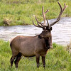 "Elk  © 2009 C. M. Neri Rocky Mountain National park, CO ELK  <div class=""ss-paypal-button""><div class=""ss-paypal-add-to-cart-section""><div class=""ss-paypal-product-options""><h4>Mat Sizes</h4><ul><li><a href=""https://www.paypal.com/cgi-bin/webscr?cmd=_cart&business=T77V5VKCW4K2U&lc=US&item_name=Elk%20%20%C2%A9%202009%20C.%20M.%20Neri%20Rocky%20Mountain%20National%20park%2C%20CO%20ELK&item_number=http%3A%2F%2Fwww.nightflightimages.com%2FGalleries-1%2FMammals%2Fi-4nT2f48&button_subtype=products&no_note=0&cn=Add%20special%20instructions%20to%20the%20seller%3A&no_shipping=2&currency_code=USD&weight_unit=lbs&add=1&bn=PP-ShopCartBF%3Abtn_cart_SM.gif%3ANonHosted&on0=Mat%20Sizes&option_select0=5%20x%207&option_amount0=10.00&option_select1=8%20x%2010&option_amount1=18.00&option_select2=11%20x%2014&option_amount2=28.00&option_select3=card&option_amount3=4.00&option_index=0&charset=utf-8&submit=&os0=5%20x%207"" target=""paypal""><span>5 x 7 $11.00 USD</span><img src=""https://www.paypalobjects.com/en_US/i/btn/btn_cart_SM.gif""></a></li><li><a href=""https://www.paypal.com/cgi-bin/webscr?cmd=_cart&business=T77V5VKCW4K2U&lc=US&item_name=Elk%20%20%C2%A9%202009%20C.%20M.%20Neri%20Rocky%20Mountain%20National%20park%2C%20CO%20ELK&item_number=http%3A%2F%2Fwww.nightflightimages.com%2FGalleries-1%2FMammals%2Fi-4nT2f48&button_subtype=products&no_note=0&cn=Add%20special%20instructions%20to%20the%20seller%3A&no_shipping=2&currency_code=USD&weight_unit=lbs&add=1&bn=PP-ShopCartBF%3Abtn_cart_SM.gif%3ANonHosted&on0=Mat%20Sizes&option_select0=5%20x%207&option_amount0=10.00&option_select1=8%20x%2010&option_amount1=18.00&option_select2=11%20x%2014&option_amount2=28.00&option_select3=card&option_amount3=4.00&option_index=0&charset=utf-8&submit=&os0=8%20x%2010"" target=""paypal""><span>8 x 10 $19.00 USD</span><img src=""https://www.paypalobjects.com/en_US/i/btn/btn_cart_SM.gif""></a></li><li><a href=""https://www.paypal.com/cgi-bin/webscr?cmd=_cart&business=T77V5VKCW4K2U&lc=US&item_name=Elk%20%20%C2%A9%202009%20C.%20M.%20Neri%20Rocky%20Mountain%20National%20park%2C%20CO%20ELK&item_number=http%3A%2F%2Fwww.nightflightimages.com%2FGalleries-1%2FMammals%2Fi-4nT2f48&button_subtype=products&no_note=0&cn=Add%20special%20instructions%20to%20the%20seller%3A&no_shipping=2&currency_code=USD&weight_unit=lbs&add=1&bn=PP-ShopCartBF%3Abtn_cart_SM.gif%3ANonHosted&on0=Mat%20Sizes&option_select0=5%20x%207&option_amount0=10.00&option_select1=8%20x%2010&option_amount1=18.00&option_select2=11%20x%2014&option_amount2=28.00&option_select3=card&option_amount3=4.00&option_index=0&charset=utf-8&submit=&os0=11%20x%2014"" target=""paypal""><span>11 x 14 $29.00 USD</span><img src=""https://www.paypalobjects.com/en_US/i/btn/btn_cart_SM.gif""></a></li><li><a href=""https://www.paypal.com/cgi-bin/webscr?cmd=_cart&business=T77V5VKCW4K2U&lc=US&item_name=Elk%20%20%C2%A9%202009%20C.%20M.%20Neri%20Rocky%20Mountain%20National%20park%2C%20CO%20ELK&item_number=http%3A%2F%2Fwww.nightflightimages.com%2FGalleries-1%2FMammals%2Fi-4nT2f48&button_subtype=products&no_note=0&cn=Add%20special%20instructions%20to%20the%20seller%3A&no_shipping=2&currency_code=USD&weight_unit=lbs&add=1&bn=PP-ShopCartBF%3Abtn_cart_SM.gif%3ANonHosted&on0=Mat%20Sizes&option_select0=5%20x%207&option_amount0=10.00&option_select1=8%20x%2010&option_amount1=18.00&option_select2=11%20x%2014&option_amount2=28.00&option_select3=card&option_amount3=4.00&option_index=0&charset=utf-8&submit=&os0=card"" target=""paypal""><span>card $5.00 USD</span><img src=""https://www.paypalobjects.com/en_US/i/btn/btn_cart_SM.gif""></a></li></ul></div></div> <div class=""ss-paypal-view-cart-section""><a href=""https://www.paypal.com/cgi-bin/webscr?cmd=_cart&business=T77V5VKCW4K2U&display=1&item_name=Elk%20%20%C2%A9%202009%20C.%20M.%20Neri%20Rocky%20Mountain%20National%20park%2C%20CO%20ELK&item_number=http%3A%2F%2Fwww.nightflightimages.com%2FGalleries-1%2FMammals%2Fi-4nT2f48&charset=utf-8&submit="" target=""paypal"" class=""ss-paypal-submit-button""><img src=""https://www.paypalobjects.com/en_US/i/btn/btn_viewcart_LG.gif""></a></div></div><div class=""ss-paypal-button-end""></div>"