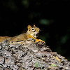 "Red Squirrel © 2008 C. M. Neri Whitefish Point, MI RESQ  <div class=""ss-paypal-button""><div class=""ss-paypal-add-to-cart-section""><div class=""ss-paypal-product-options""><h4>Mat Sizes</h4><ul><li><a href=""https://www.paypal.com/cgi-bin/webscr?cmd=_cart&business=T77V5VKCW4K2U&lc=US&item_name=Red%20Squirrel%20%C2%A9%202008%20C.%20M.%20Neri%20Whitefish%20Point%2C%20MI%20RESQ&item_number=http%3A%2F%2Fwww.nightflightimages.com%2FGalleries-1%2FTravels%2Fi-P36CfGd&button_subtype=products&no_note=0&cn=Add%20special%20instructions%20to%20the%20seller%3A&no_shipping=2&currency_code=USD&weight_unit=lbs&add=1&bn=PP-ShopCartBF%3Abtn_cart_SM.gif%3ANonHosted&on0=Mat%20Sizes&option_select0=5%20x%207&option_amount0=10.00&option_select1=8%20x%2010&option_amount1=18.00&option_select2=11%20x%2014&option_amount2=28.00&option_select3=card&option_amount3=4.00&option_index=0&charset=utf-8&submit=&os0=5%20x%207"" target=""paypal""><span>5 x 7 $11.00 USD</span><img src=""https://www.paypalobjects.com/en_US/i/btn/btn_cart_SM.gif""></a></li><li><a href=""https://www.paypal.com/cgi-bin/webscr?cmd=_cart&business=T77V5VKCW4K2U&lc=US&item_name=Red%20Squirrel%20%C2%A9%202008%20C.%20M.%20Neri%20Whitefish%20Point%2C%20MI%20RESQ&item_number=http%3A%2F%2Fwww.nightflightimages.com%2FGalleries-1%2FTravels%2Fi-P36CfGd&button_subtype=products&no_note=0&cn=Add%20special%20instructions%20to%20the%20seller%3A&no_shipping=2&currency_code=USD&weight_unit=lbs&add=1&bn=PP-ShopCartBF%3Abtn_cart_SM.gif%3ANonHosted&on0=Mat%20Sizes&option_select0=5%20x%207&option_amount0=10.00&option_select1=8%20x%2010&option_amount1=18.00&option_select2=11%20x%2014&option_amount2=28.00&option_select3=card&option_amount3=4.00&option_index=0&charset=utf-8&submit=&os0=8%20x%2010"" target=""paypal""><span>8 x 10 $19.00 USD</span><img src=""https://www.paypalobjects.com/en_US/i/btn/btn_cart_SM.gif""></a></li><li><a href=""https://www.paypal.com/cgi-bin/webscr?cmd=_cart&business=T77V5VKCW4K2U&lc=US&item_name=Red%20Squirrel%20%C2%A9%202008%20C.%20M.%20Neri%20Whitefish%20Point%2C%20MI%20RESQ&item_number=http%3A%2F%2Fwww.nightflightimages.com%2FGalleries-1%2FTravels%2Fi-P36CfGd&button_subtype=products&no_note=0&cn=Add%20special%20instructions%20to%20the%20seller%3A&no_shipping=2&currency_code=USD&weight_unit=lbs&add=1&bn=PP-ShopCartBF%3Abtn_cart_SM.gif%3ANonHosted&on0=Mat%20Sizes&option_select0=5%20x%207&option_amount0=10.00&option_select1=8%20x%2010&option_amount1=18.00&option_select2=11%20x%2014&option_amount2=28.00&option_select3=card&option_amount3=4.00&option_index=0&charset=utf-8&submit=&os0=11%20x%2014"" target=""paypal""><span>11 x 14 $29.00 USD</span><img src=""https://www.paypalobjects.com/en_US/i/btn/btn_cart_SM.gif""></a></li><li><a href=""https://www.paypal.com/cgi-bin/webscr?cmd=_cart&business=T77V5VKCW4K2U&lc=US&item_name=Red%20Squirrel%20%C2%A9%202008%20C.%20M.%20Neri%20Whitefish%20Point%2C%20MI%20RESQ&item_number=http%3A%2F%2Fwww.nightflightimages.com%2FGalleries-1%2FTravels%2Fi-P36CfGd&button_subtype=products&no_note=0&cn=Add%20special%20instructions%20to%20the%20seller%3A&no_shipping=2&currency_code=USD&weight_unit=lbs&add=1&bn=PP-ShopCartBF%3Abtn_cart_SM.gif%3ANonHosted&on0=Mat%20Sizes&option_select0=5%20x%207&option_amount0=10.00&option_select1=8%20x%2010&option_amount1=18.00&option_select2=11%20x%2014&option_amount2=28.00&option_select3=card&option_amount3=4.00&option_index=0&charset=utf-8&submit=&os0=card"" target=""paypal""><span>card $5.00 USD</span><img src=""https://www.paypalobjects.com/en_US/i/btn/btn_cart_SM.gif""></a></li></ul></div></div> <div class=""ss-paypal-view-cart-section""><a href=""https://www.paypal.com/cgi-bin/webscr?cmd=_cart&business=T77V5VKCW4K2U&display=1&item_name=Red%20Squirrel%20%C2%A9%202008%20C.%20M.%20Neri%20Whitefish%20Point%2C%20MI%20RESQ&item_number=http%3A%2F%2Fwww.nightflightimages.com%2FGalleries-1%2FTravels%2Fi-P36CfGd&charset=utf-8&submit="" target=""paypal"" class=""ss-paypal-submit-button""><img src=""https://www.paypalobjects.com/en_US/i/btn/btn_viewcart_LG.gif""></a></div></div><div class=""ss-paypal-button-end""></div>"