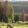 """Elk with mountains © 2009 Nova Mackentley Rocky Mountain National Park, CO EWM  <div class=""""ss-paypal-button""""><div class=""""ss-paypal-add-to-cart-section""""><div class=""""ss-paypal-product-options""""><h4>Mat Sizes</h4><ul><li><a href=""""https://www.paypal.com/cgi-bin/webscr?cmd=_cart&business=T77V5VKCW4K2U&lc=US&item_name=Elk%20with%20mountains%20%C2%A9%202009%20Nova%20Mackentley%20Rocky%20Mountain%20National%20Park%2C%20CO%20EWM&item_number=http%3A%2F%2Fwww.nightflightimages.com%2FGalleries-1%2FTravels%2Fi-rP29Tcm&button_subtype=products&no_note=0&cn=Add%20special%20instructions%20to%20the%20seller%3A&no_shipping=2&currency_code=USD&weight_unit=lbs&add=1&bn=PP-ShopCartBF%3Abtn_cart_SM.gif%3ANonHosted&on0=Mat%20Sizes&option_select0=5%20x%207&option_amount0=10.00&option_select1=8%20x%2010&option_amount1=18.00&option_select2=11%20x%2014&option_amount2=28.00&option_select3=card&option_amount3=4.00&option_index=0&charset=utf-8&submit=&os0=5%20x%207"""" target=""""paypal""""><span>5 x 7 $11.00 USD</span><img src=""""https://www.paypalobjects.com/en_US/i/btn/btn_cart_SM.gif""""></a></li><li><a href=""""https://www.paypal.com/cgi-bin/webscr?cmd=_cart&business=T77V5VKCW4K2U&lc=US&item_name=Elk%20with%20mountains%20%C2%A9%202009%20Nova%20Mackentley%20Rocky%20Mountain%20National%20Park%2C%20CO%20EWM&item_number=http%3A%2F%2Fwww.nightflightimages.com%2FGalleries-1%2FTravels%2Fi-rP29Tcm&button_subtype=products&no_note=0&cn=Add%20special%20instructions%20to%20the%20seller%3A&no_shipping=2&currency_code=USD&weight_unit=lbs&add=1&bn=PP-ShopCartBF%3Abtn_cart_SM.gif%3ANonHosted&on0=Mat%20Sizes&option_select0=5%20x%207&option_amount0=10.00&option_select1=8%20x%2010&option_amount1=18.00&option_select2=11%20x%2014&option_amount2=28.00&option_select3=card&option_amount3=4.00&option_index=0&charset=utf-8&submit=&os0=8%20x%2010"""" target=""""paypal""""><span>8 x 10 $19.00 USD</span><img src=""""https://www.paypalobjects.com/en_US/i/btn/btn_cart_SM.gif""""></a></li><li><a href=""""https://www.paypal.com/cgi-bin/webscr?cmd=_cart&busin"""