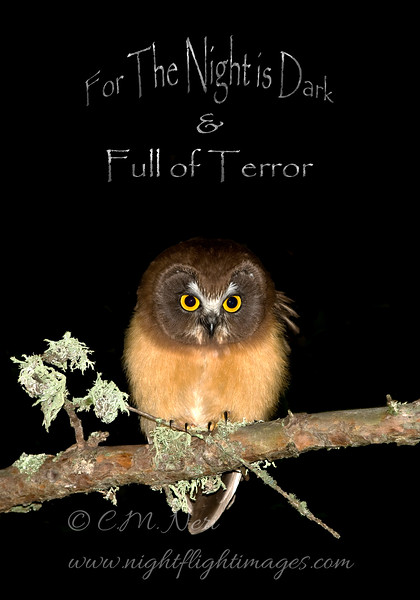 "Northern Saw-whet Owl © 2009 Chris M Neri Whitefish Point, MI FTN  <div class=""ss-paypal-button""><div class=""ss-paypal-add-to-cart-section""><div class=""ss-paypal-product-options""><h4>Mat Sizes</h4><ul><li><a href=""https://www.paypal.com/cgi-bin/webscr?cmd=_cart&business=T77V5VKCW4K2U&lc=US&item_name=Northern%20Saw-whet%20Owl%20%C2%A9%202009%20Chris%20M%20Neri%20Whitefish%20Point%2C%20MI%20FTN&item_number=http%3A%2F%2Fwww.nightflightimages.com%2FGalleries-1%2FNew%2Fi-QwSBNrp&button_subtype=products&no_note=0&cn=Add%20special%20instructions%20to%20the%20seller%3A&no_shipping=2&currency_code=USD&weight_unit=lbs&add=1&bn=PP-ShopCartBF%3Abtn_cart_SM.gif%3ANonHosted&on0=Mat%20Sizes&option_select0=5%20x%207&option_amount0=12.00&option_select1=8%20x%2010&option_amount1=19.00&option_select2=11%20x%2014&option_amount2=29.00&option_select3=card&option_amount3=5.00&option_index=0&charset=utf-8&submit=&os0=5%20x%207"" target=""paypal""><span>5 x 7 $12.00 USD</span><img src=""https://www.paypalobjects.com/en_US/i/btn/btn_cart_SM.gif""></a></li><li><a href=""https://www.paypal.com/cgi-bin/webscr?cmd=_cart&business=T77V5VKCW4K2U&lc=US&item_name=Northern%20Saw-whet%20Owl%20%C2%A9%202009%20Chris%20M%20Neri%20Whitefish%20Point%2C%20MI%20FTN&item_number=http%3A%2F%2Fwww.nightflightimages.com%2FGalleries-1%2FNew%2Fi-QwSBNrp&button_subtype=products&no_note=0&cn=Add%20special%20instructions%20to%20the%20seller%3A&no_shipping=2&currency_code=USD&weight_unit=lbs&add=1&bn=PP-ShopCartBF%3Abtn_cart_SM.gif%3ANonHosted&on0=Mat%20Sizes&option_select0=5%20x%207&option_amount0=12.00&option_select1=8%20x%2010&option_amount1=19.00&option_select2=11%20x%2014&option_amount2=29.00&option_select3=card&option_amount3=5.00&option_index=0&charset=utf-8&submit=&os0=8%20x%2010"" target=""paypal""><span>8 x 10 $19.00 USD</span><img src=""https://www.paypalobjects.com/en_US/i/btn/btn_cart_SM.gif""></a></li><li><a href=""https://www.paypal.com/cgi-bin/webscr?cmd=_cart&business=T77V5VKCW4K2U&lc=US&item_name=Northern%20Saw-whet%20Owl%20%C2%A9%202009%20Chris%20M%20Neri%20Whitefish%20Point%2C%20MI%20FTN&item_number=http%3A%2F%2Fwww.nightflightimages.com%2FGalleries-1%2FNew%2Fi-QwSBNrp&button_subtype=products&no_note=0&cn=Add%20special%20instructions%20to%20the%20seller%3A&no_shipping=2&currency_code=USD&weight_unit=lbs&add=1&bn=PP-ShopCartBF%3Abtn_cart_SM.gif%3ANonHosted&on0=Mat%20Sizes&option_select0=5%20x%207&option_amount0=12.00&option_select1=8%20x%2010&option_amount1=19.00&option_select2=11%20x%2014&option_amount2=29.00&option_select3=card&option_amount3=5.00&option_index=0&charset=utf-8&submit=&os0=11%20x%2014"" target=""paypal""><span>11 x 14 $29.00 USD</span><img src=""https://www.paypalobjects.com/en_US/i/btn/btn_cart_SM.gif""></a></li><li><a href=""https://www.paypal.com/cgi-bin/webscr?cmd=_cart&business=T77V5VKCW4K2U&lc=US&item_name=Northern%20Saw-whet%20Owl%20%C2%A9%202009%20Chris%20M%20Neri%20Whitefish%20Point%2C%20MI%20FTN&item_number=http%3A%2F%2Fwww.nightflightimages.com%2FGalleries-1%2FNew%2Fi-QwSBNrp&button_subtype=products&no_note=0&cn=Add%20special%20instructions%20to%20the%20seller%3A&no_shipping=2&currency_code=USD&weight_unit=lbs&add=1&bn=PP-ShopCartBF%3Abtn_cart_SM.gif%3ANonHosted&on0=Mat%20Sizes&option_select0=5%20x%207&option_amount0=12.00&option_select1=8%20x%2010&option_amount1=19.00&option_select2=11%20x%2014&option_amount2=29.00&option_select3=card&option_amount3=5.00&option_index=0&charset=utf-8&submit=&os0=card"" target=""paypal""><span>card $5.00 USD</span><img src=""https://www.paypalobjects.com/en_US/i/btn/btn_cart_SM.gif""></a></li></ul></div></div> <div class=""ss-paypal-view-cart-section""><a href=""https://www.paypal.com/cgi-bin/webscr?cmd=_cart&business=T77V5VKCW4K2U&display=1&item_name=Northern%20Saw-whet%20Owl%20%C2%A9%202009%20Chris%20M%20Neri%20Whitefish%20Point%2C%20MI%20FTN&item_number=http%3A%2F%2Fwww.nightflightimages.com%2FGalleries-1%2FNew%2Fi-QwSBNrp&charset=utf-8&submit="" target=""paypal"" class=""ss-paypal-submit-button""><img src=""https://www.paypalobjects.com/en_US/i/btn/btn_viewcart_LG.gif""></a></div></div><div class=""ss-paypal-button-end""></div>"
